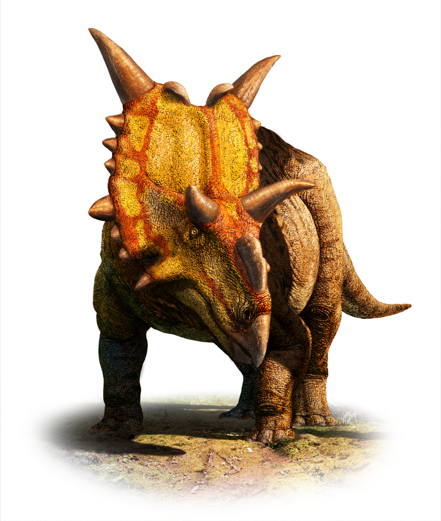 Xenoceratops_Cutout_White_1500.jpg